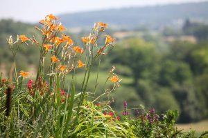 Blume auf Hof Siedental