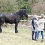 Co Trainer Pferdegestütztes Coaching