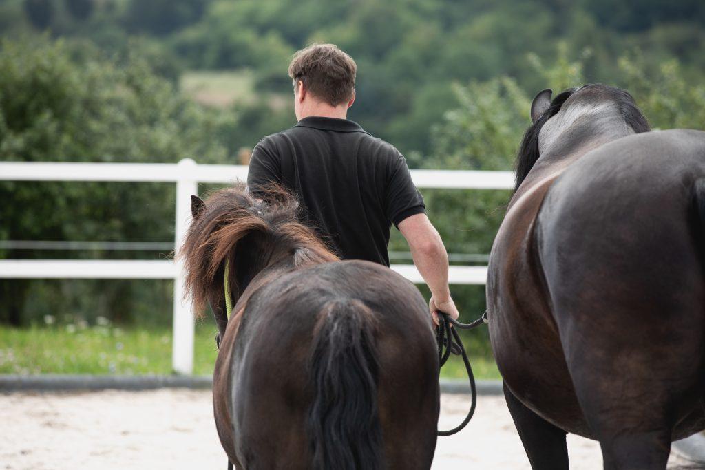 Pferdegestütztes Führungskräftecoaching