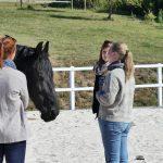 Pferdegestütztes Coaching systemisch