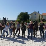Ausbildungsgruppe Systemisches Coaching mit Pferden
