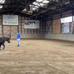 Ausbildung Pferdecoaching (20)