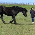 Ausbildung im Pferdegestützten Coaching