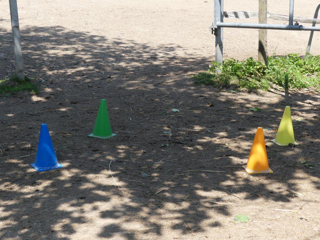 Ausbildung Coaching mit Pferden