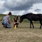 Coaching mit Pferd in der arena