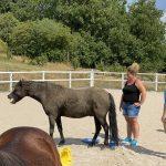 Pferd gähnt im coaching