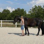 Pferd im Coaching