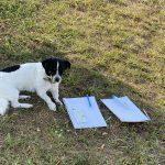 Hund als Co Trainer