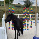 Pferd im bälletor
