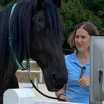 Klientin mit Pferd