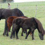 Co Trainer Pferde