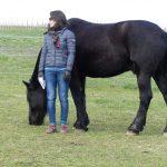 Frau im Seminar mit Pferden