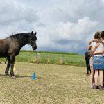 Systemisches Coaching mit Pferd