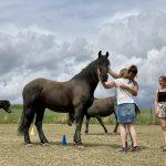Pferd als Co Trainer