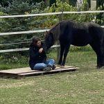 Ausbildung Pferdecoaching