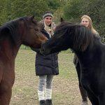 Klienten auf Pferdekoppel