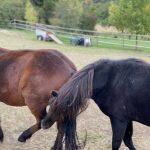 Pferde spielen