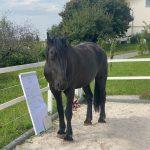 Coaching Pferd