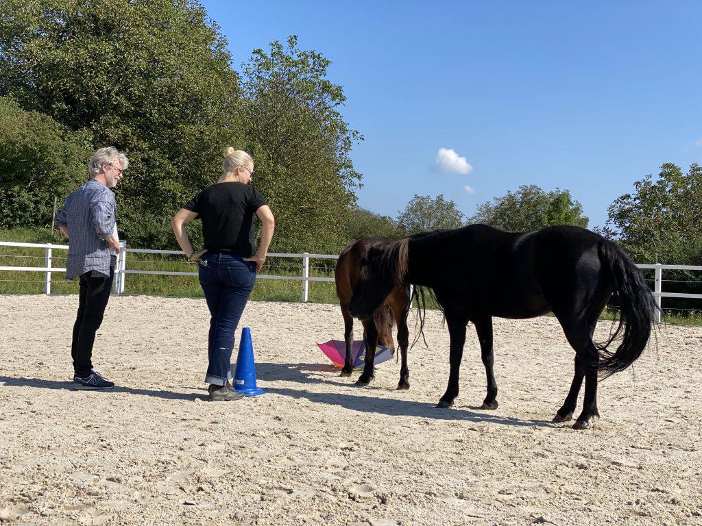 Ausbildung zum Coach mit Pferden