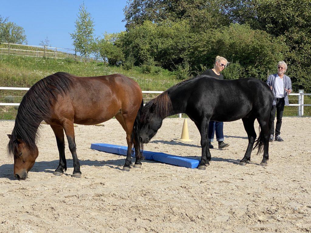 Pferde auf Hof Siedental